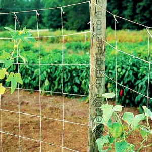 vegetable-support-net-in-open-field