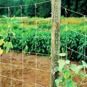 vegetable-support-net-in-open-field