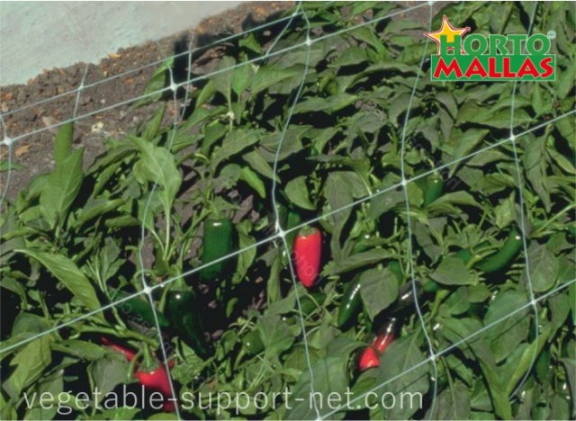 pepper cultivation with plastic crop netting mesh