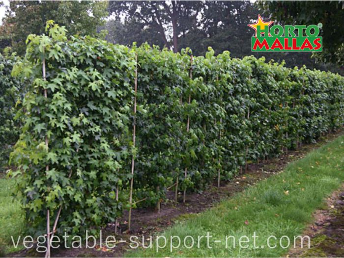 vine trellis with a vegetable support system