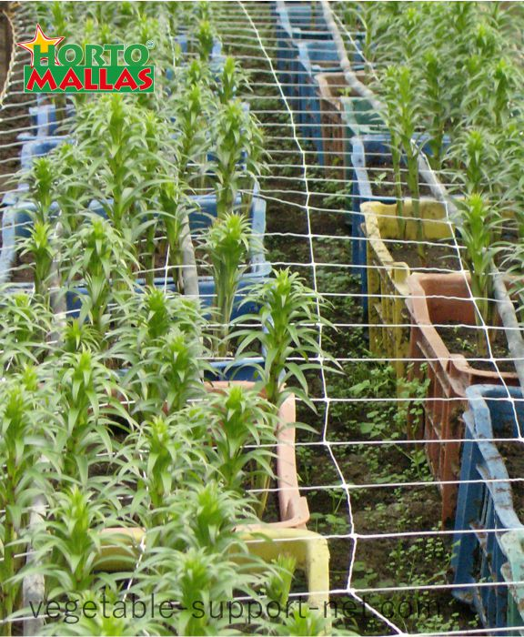nylon trellis netting on cultivation pots