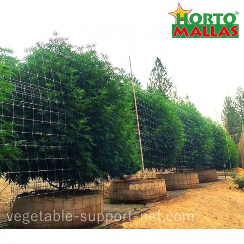 scrog netting on cannabis