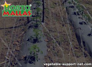 Vegetable netting support