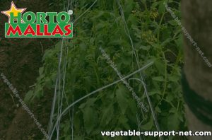 vegetable support net